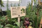 Plantekasser i Møllergade af Spåneriet for Grønt og Blåt-gruppen