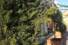 Skovgaden af Grønt og Blåt-gruppen